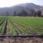 توسعه آبیاری نوین، راهکار پایداری کشاورزی درگناوه